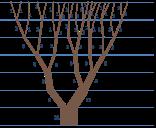 fibonacci-tree